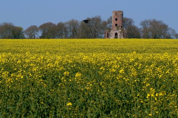 Photo of a field of yellow flowers with an old ruin of a building in the back