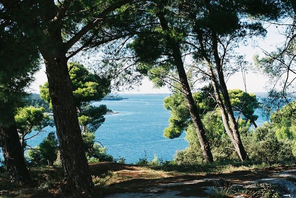 Photo of the sea seen through the woods taken on film