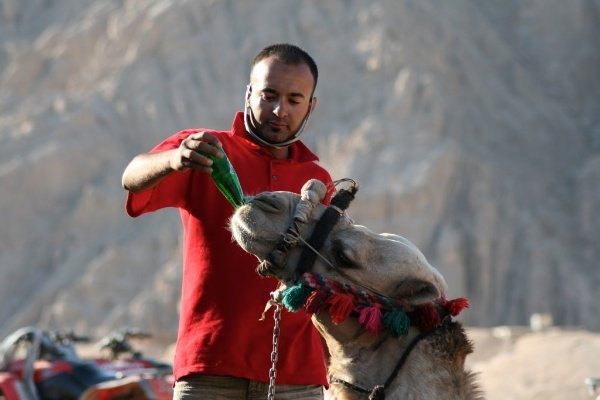 A man in a red t-shirt feeding a camel - Shooting Modes