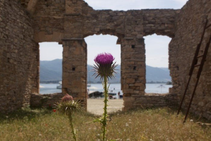 Flower with the ruins of a building behind it creating a frame