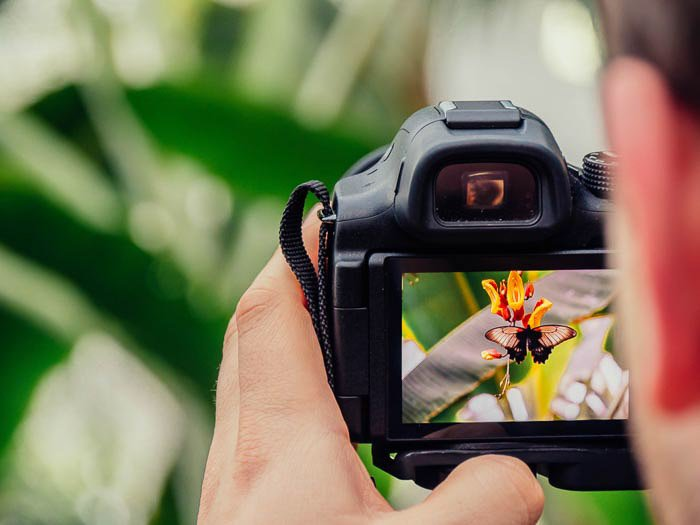 Close up of a man looking through a DSLR camera and taking a photo of a flower