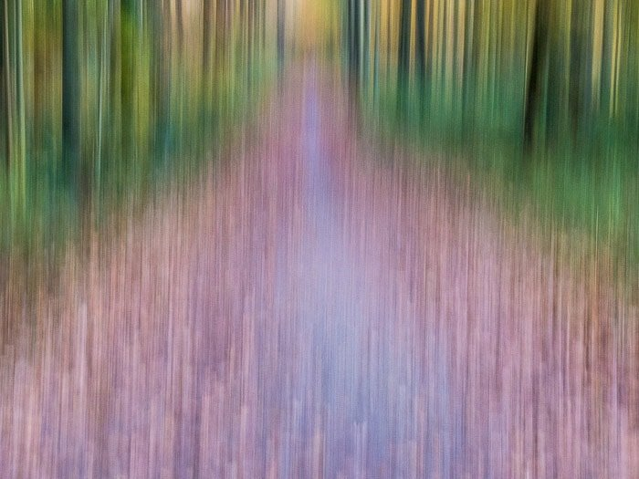 Abstract landscape in the Sonian forest using creative motion blur