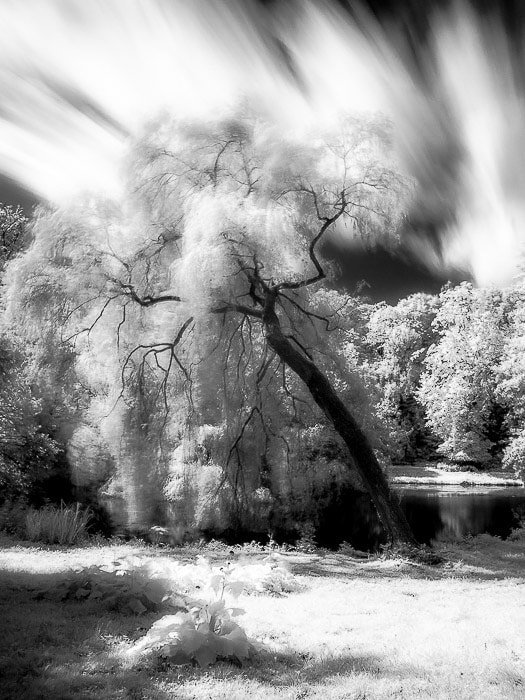 Infrared long exposure (about 20 seconds) in a city garden. creative motion blur.