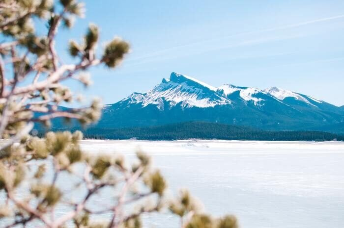 Photo of a snowy mountain shot through the branches of a tree