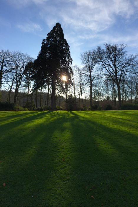 The sun is peaking through the trees leaving long shadows on the grass in front of them