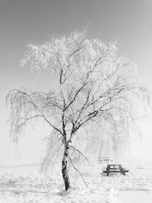 A tree with frozen branches standing in snowy park