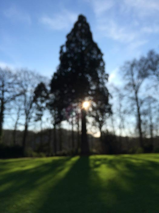 Blurred picture of the sun peaking through the trees leaving long shadows on the grass