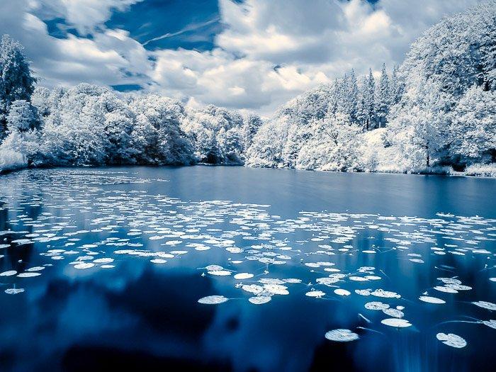 "False colour infrared photo of the pond in the ""Domaine Solvay - Chateaux de la Hulpe"", La Hulpe (Belgium)."