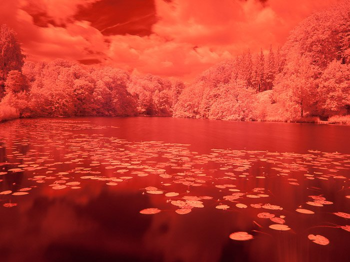 An eye-catching red pond at Chateau de la Hulpe, Belgium captured through infrared photography