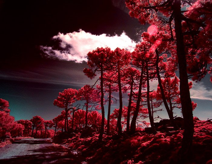 An eye-catching red and black landscape captured through infrared photography