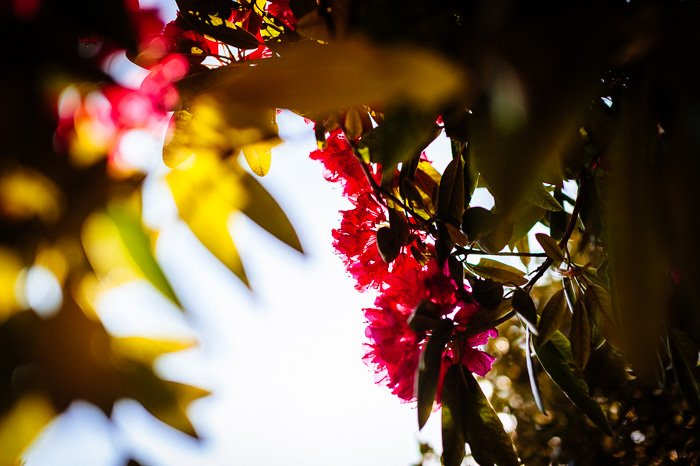 Colorful autumn leaves with foreground bokeh effect, shot with a 50mm prime lens