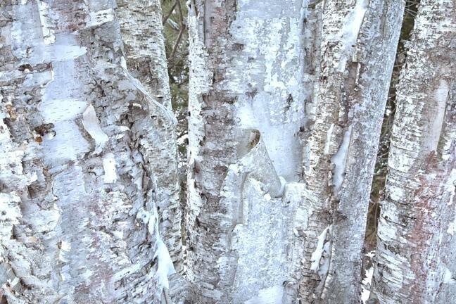 Example of tree bark texture