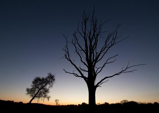 An image showing silhouettes of trees