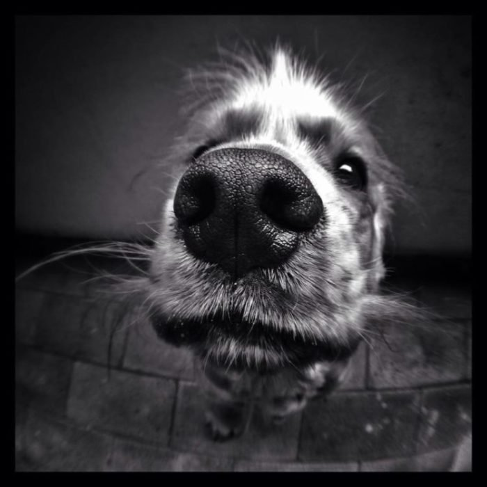 Fisheye Lens Photography: Close-up of dog's nose
