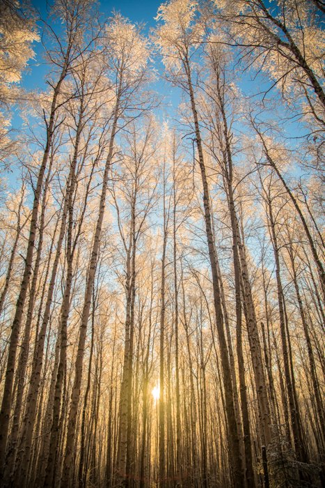 Forest photography with golden hour sunlight