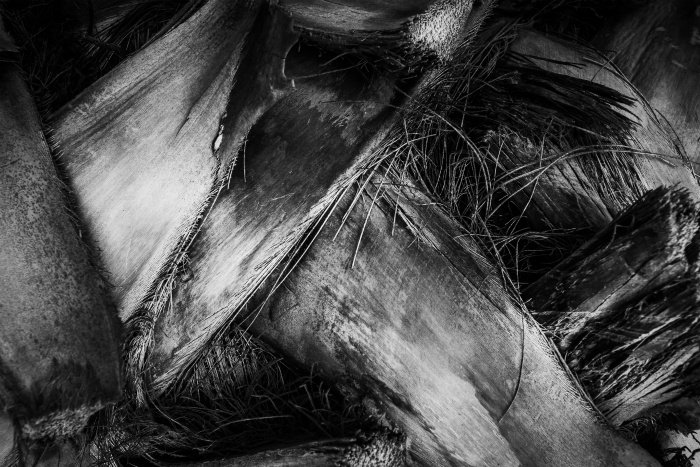 Black and white close-up photo of a palm stem showing plant textures