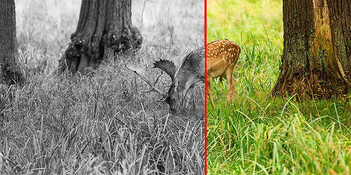Low contrast before-and-after scene of deer in grass