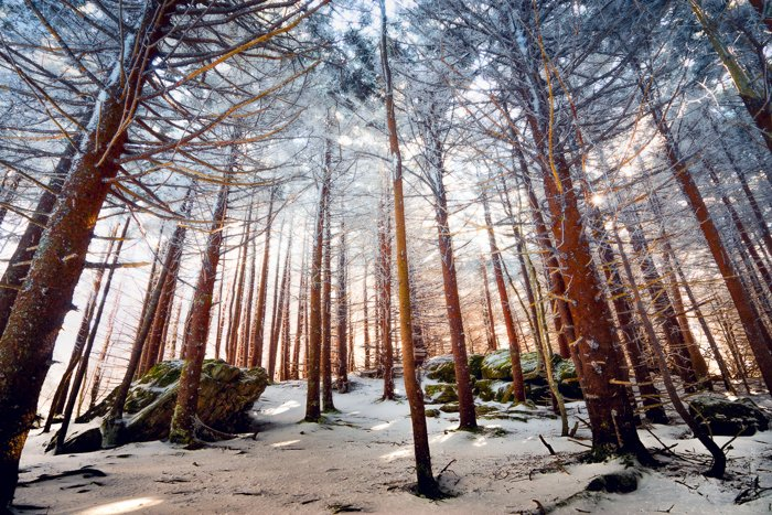 Dramatic Weather: textured cloudy sky seen from low angle through a forest in winter
