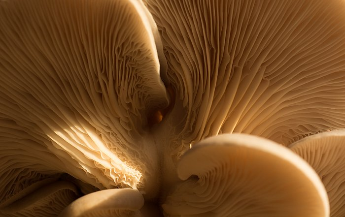 Close-up natural monochrome image of underside of mushroom