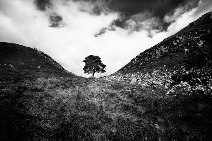 Black and white view looking up at small tree with white clouds in background from a distance