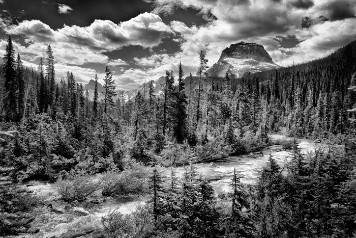 A grayscale view of sparse forest