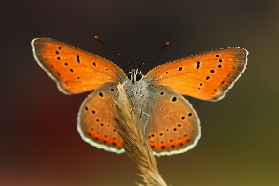 Settings for Macro Photography: Close-up image of orange butterfly