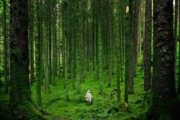 a person walking in a light filled forest