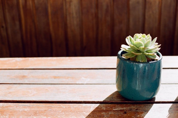 Photo of a potted plant on a wooden table