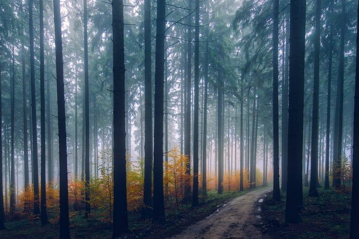 A moody picture of forest covered in mist