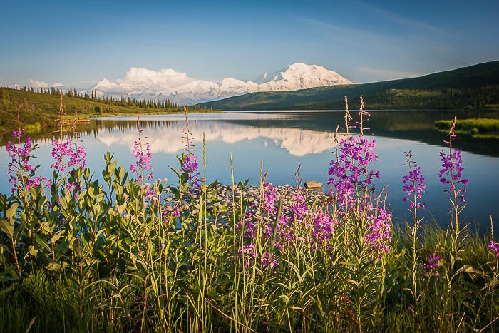 Mt McKinley with vibrant flowers in the foreground with a mirror-surface lake.