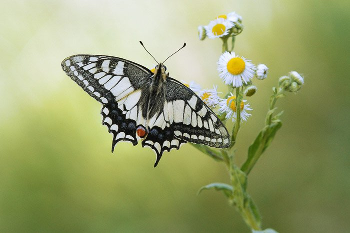 Macro Photograph of a butterfly resting on a flower
