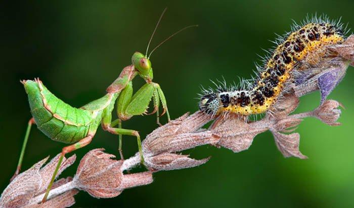 螳螂和树枝的一个slug