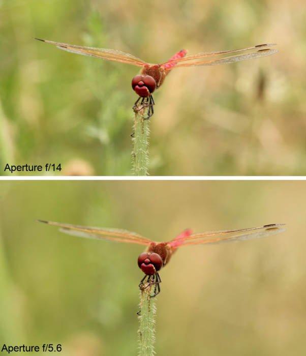 用一张蜻蜓的照片来显示两个不同f/stops之间的景深差异。