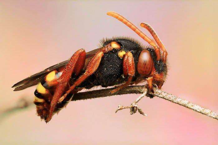 一只昆虫坐在树枝上的特写镜头