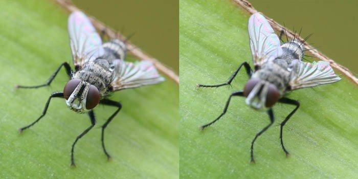 用一只苍蝇来展示一个图像叠加后处理的例子