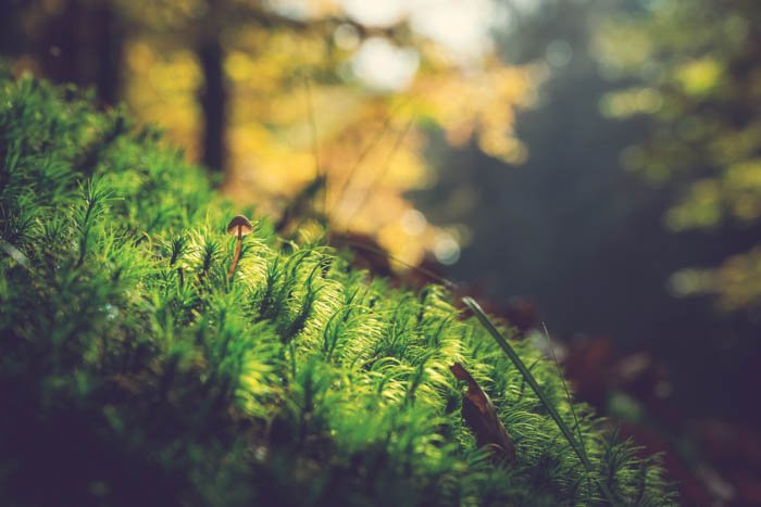 森林地面上的蘑菇的特写