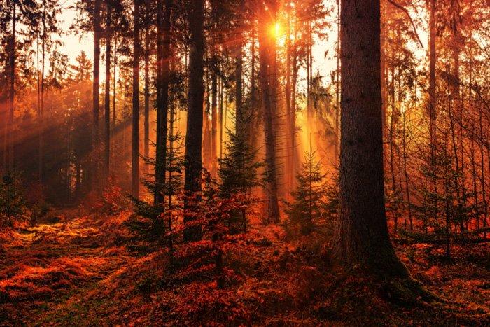 昏暗光线下的森林景色