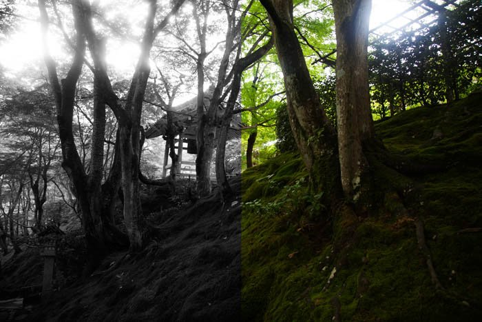 An splitscreen forest image showing both black and white and colour