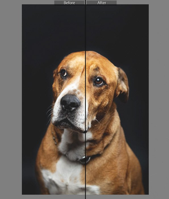A screenshot of before and after editing a pet portraitin Lightroom