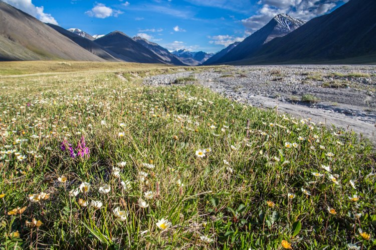 A meadow with wild flowers surrounding grey rocks with mountains in the background