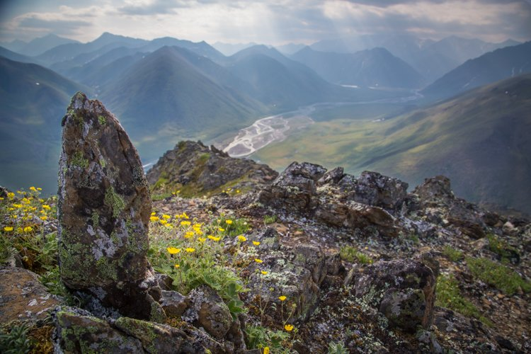 A rocky mountain top with rocks and yellow flowers overlooking a valley and other mountains