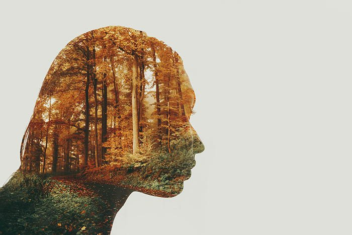 A double-exposure image using the profile silhouette of a woman and a forest photo, on a white background