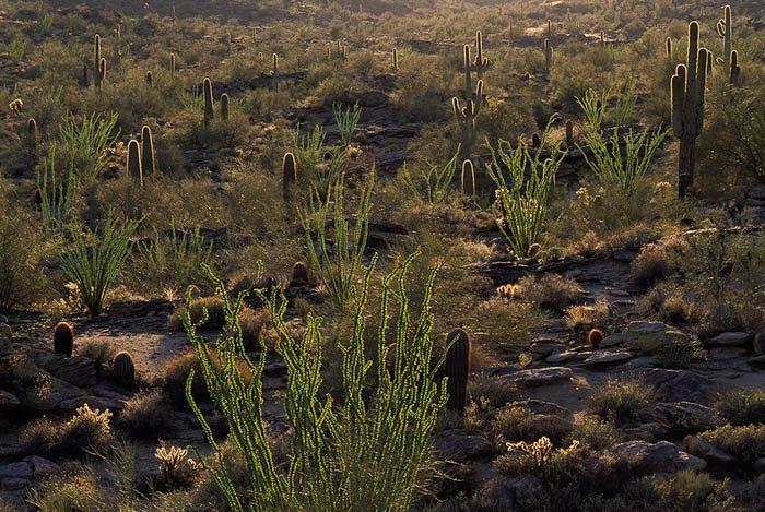 Desert flora photography