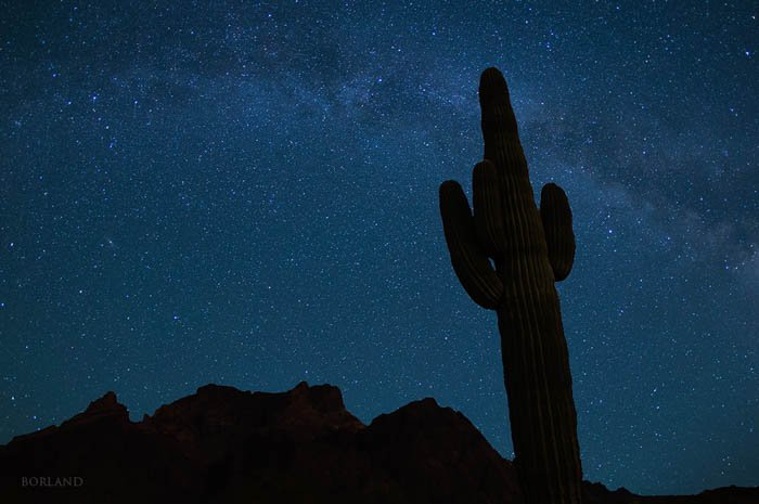 nighttime desert photography showing the silhouettes of mountains and a cactus with the starry night sky in the background