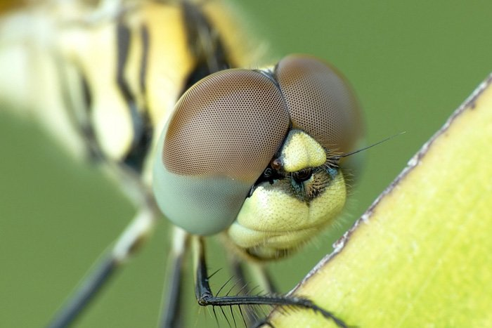 关闭蜻蜓面孔