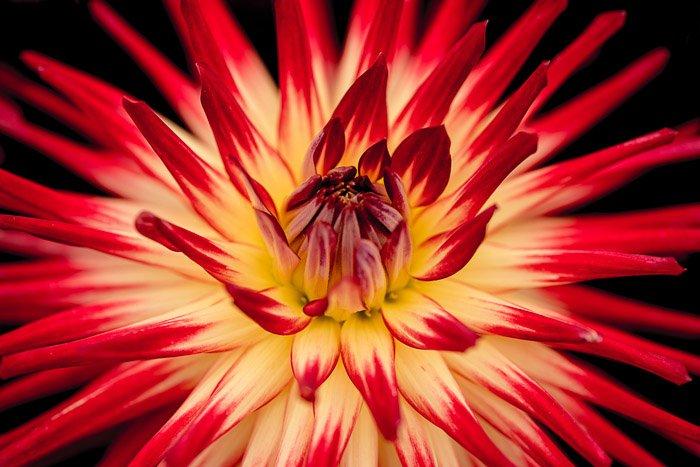 一张红色和橙色花朵的特写