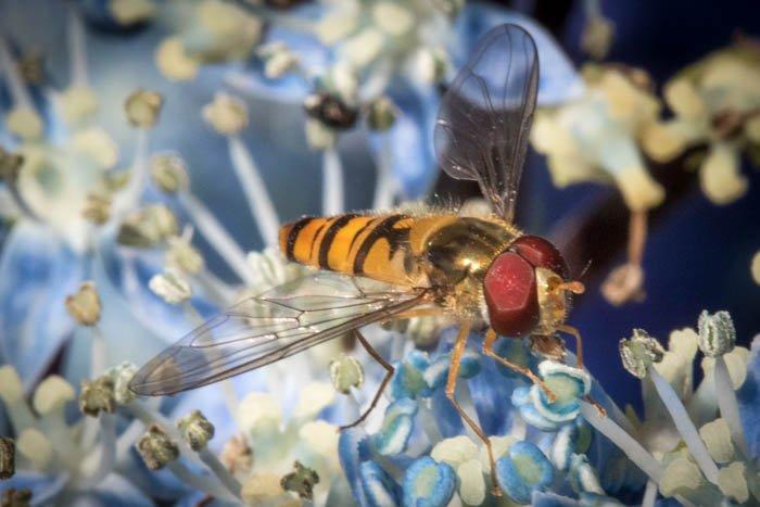 一张黄蜂在花上的微距特写照片
