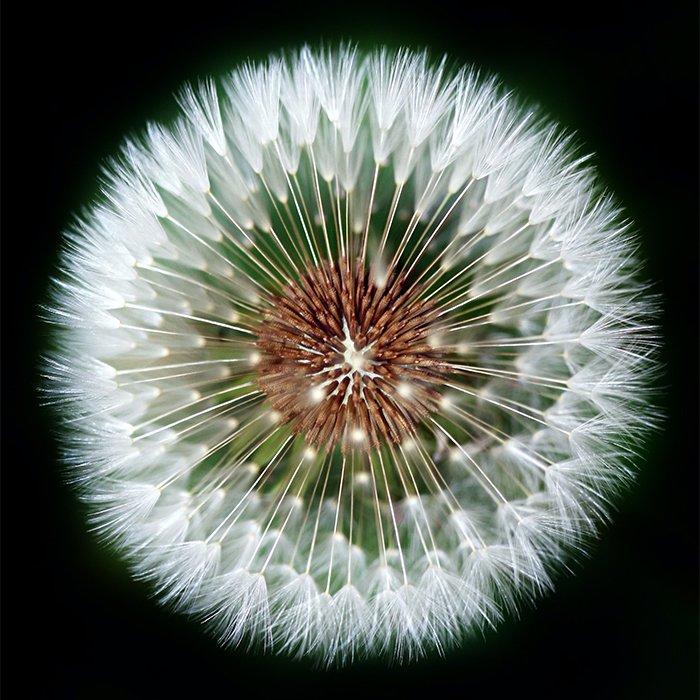 植物摄影中的成分重量