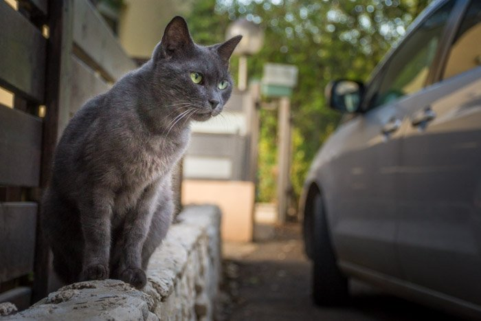 stray cat picture near a car