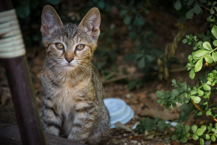 a photograph of a cute stray cat outdoors